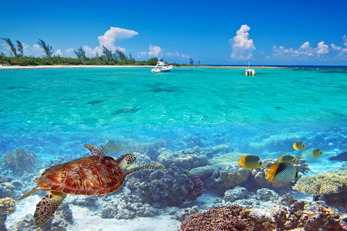 Things To Do In Barbados Which Will Make You Book A Holiday - 10 things to see and do in barbados
