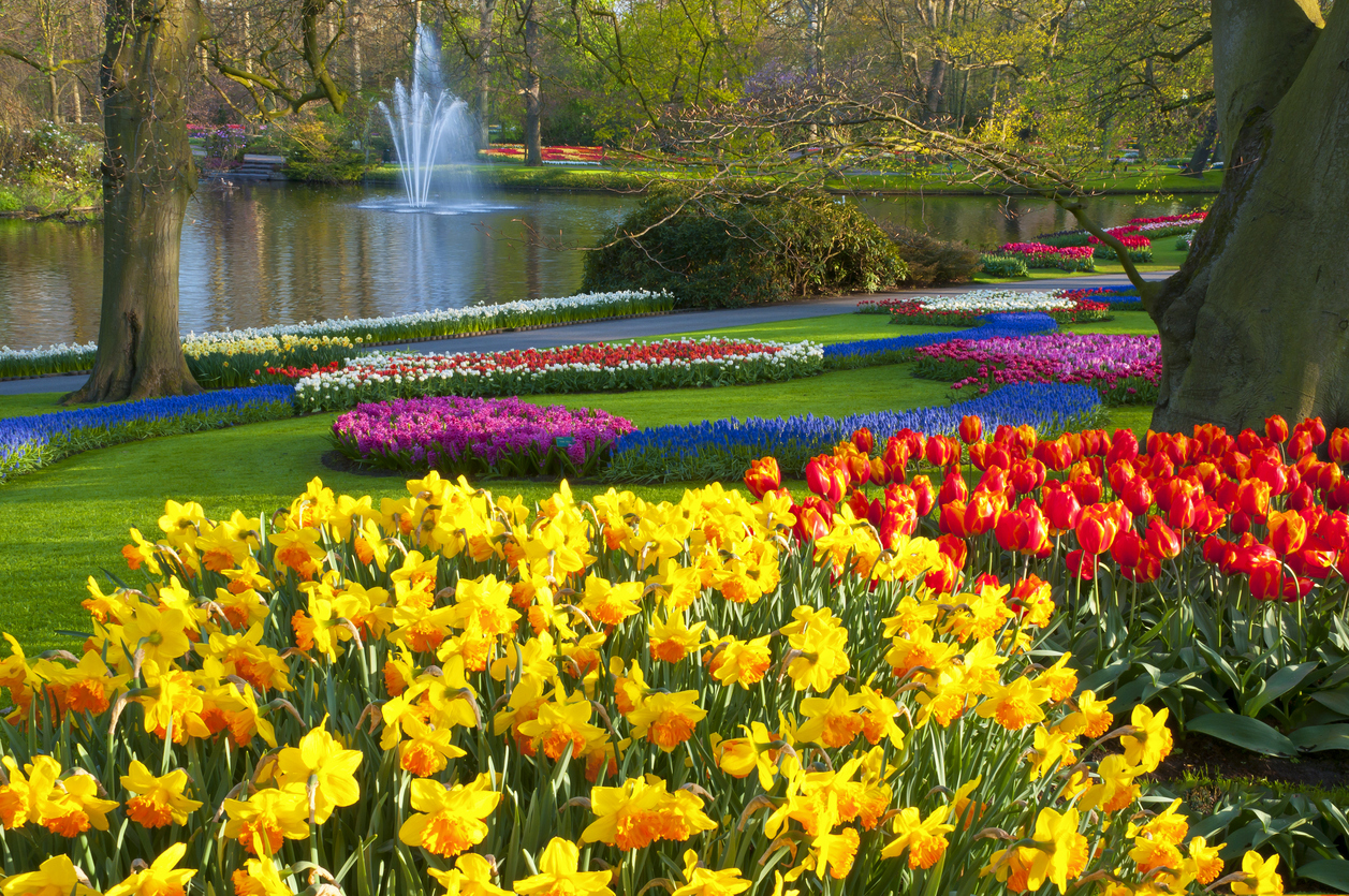 Park with multi-colored spring flowers Location is the Keukenhof garden, Netherlands.