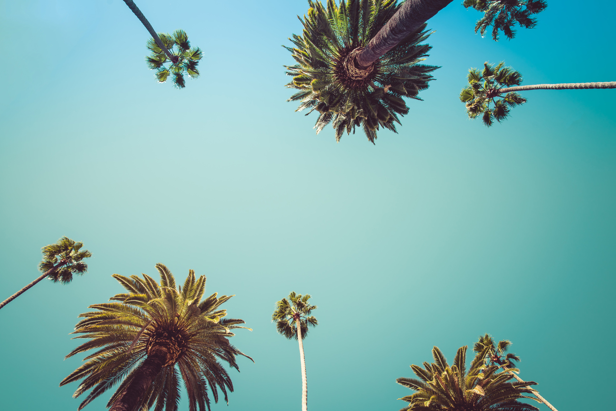 Vintage Beverly Hills captivating Palm Trees